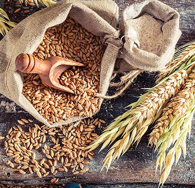Céréales et graines 2